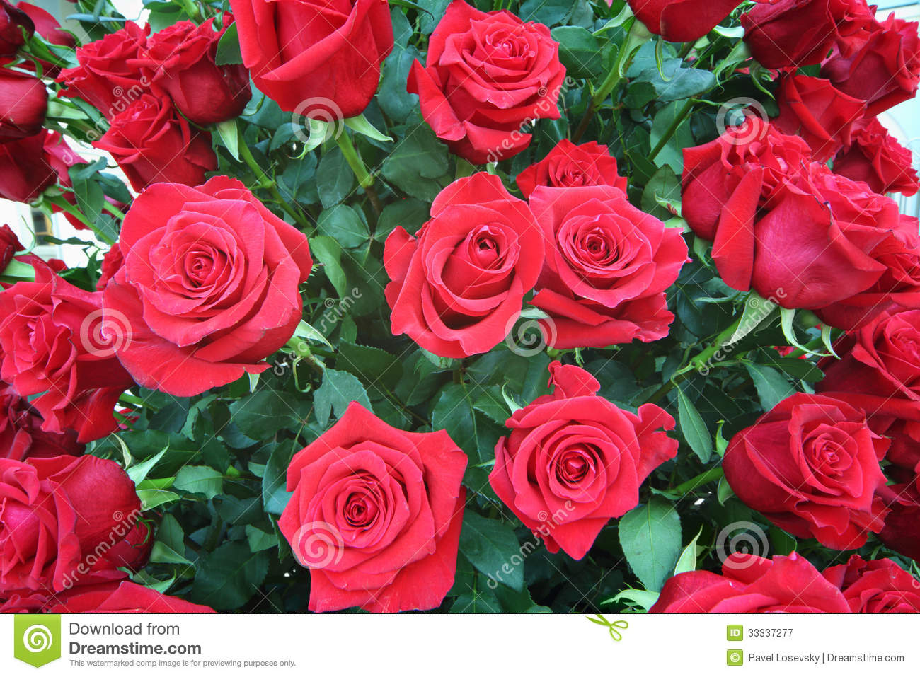 large-bright-bouquet-freshly-cut-big-red-roses-beautiful-33337277